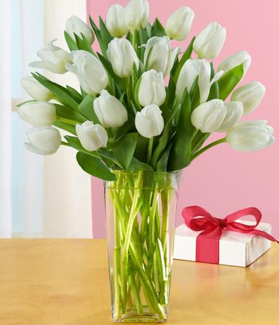 du-kieu-cam-hoa-tulip-de-nhung-dep-sang-trong