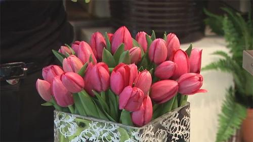 du-kieu-cam-hoa-tulip-de-nhung-dep-sang-trong-2