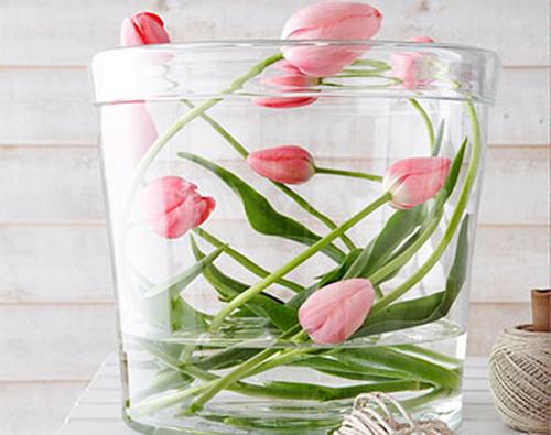 du-kieu-cam-hoa-tulip-de-nhung-dep-sang-trong-4