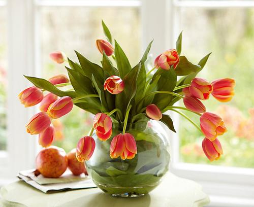 du-kieu-cam-hoa-tulip-de-nhung-dep-sang-trong-1
