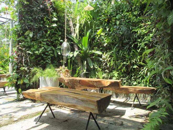Khu vườn nhiệt đới ôm trọn nóc nhà tranh ở Bình Dương