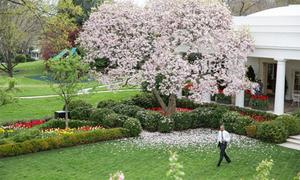 Vườn Hồng nổi tiếng trong nhà của ông Obama