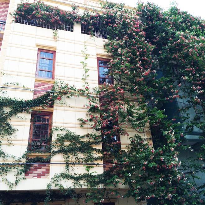 Giàn cây giải nhiệt cho ngôi nhà hướng Tây 3 mặt đường