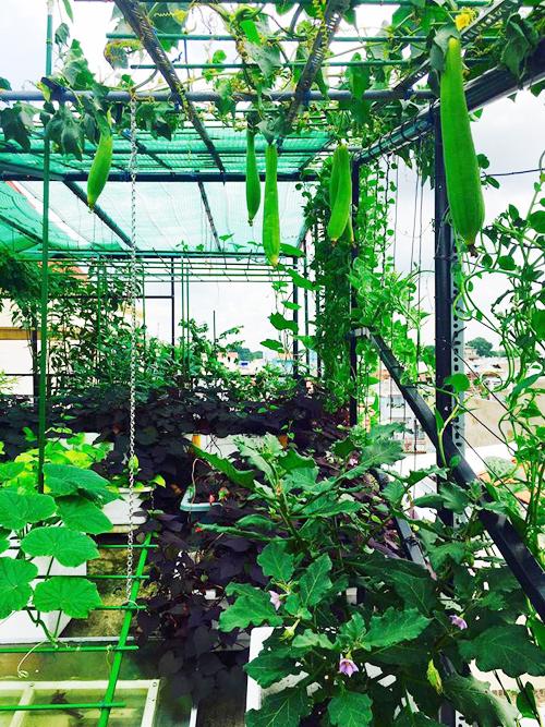 Vườn rau trên mái ăn không hết của nhà thiết kế nổi tiếng