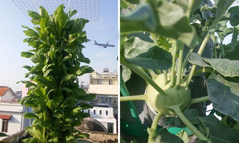 Vườn 10m2 thu hoạch gần 100 kg rau của ông bố Sài Gòn