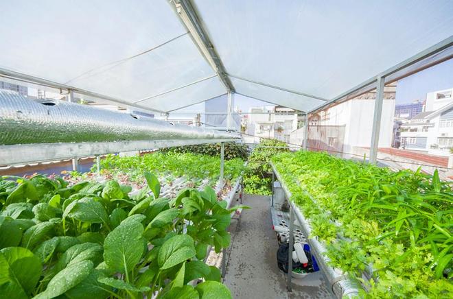 Chủ nhà Sài Gòn thừa rau ăn với vườn trên mái ngói