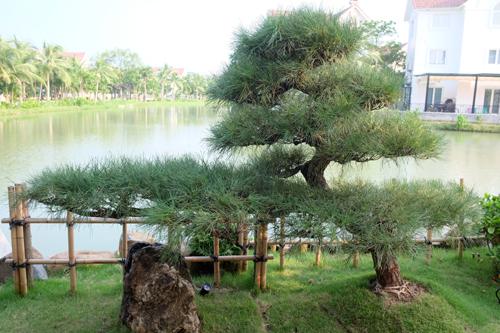 nhat 12 2939 1473906335 - Vườn Nhật 120m2 trong biệt thự Hà Nội