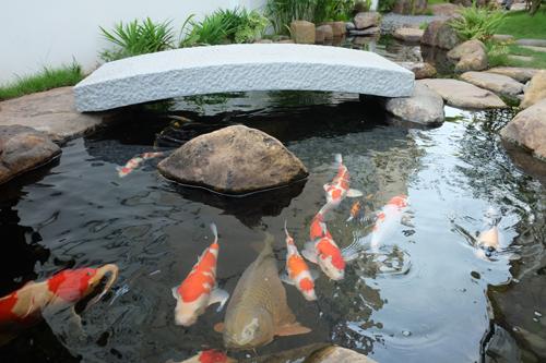 nhat 8 6559 1473906335 - Vườn Nhật 120m2 trong biệt thự Hà Nội