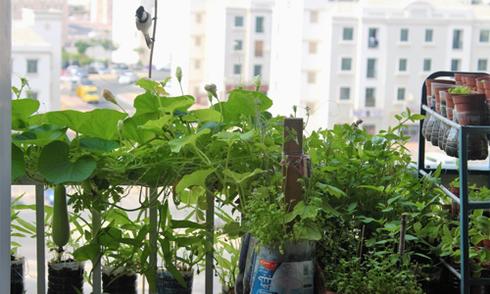 Anh kỹ sư Việt khổ công làm vườn rau ở xứ sa mạc Dubai