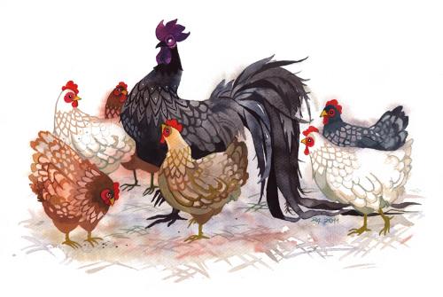 Năm Dậu có nên cúng gà không? - ảnh 1