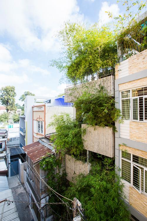 tre 1 1486002834 660x0 Gia chủ nước ngoài trồng trúc kín nhà 4 tầng ở Sài Gòn