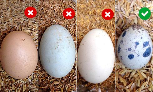 12 sự thật về trứng ít người biết