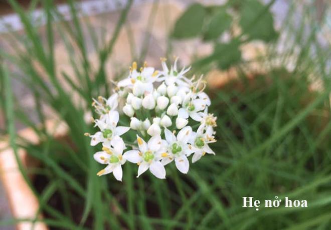 hoa-he-no-hoa_660x0.jpg