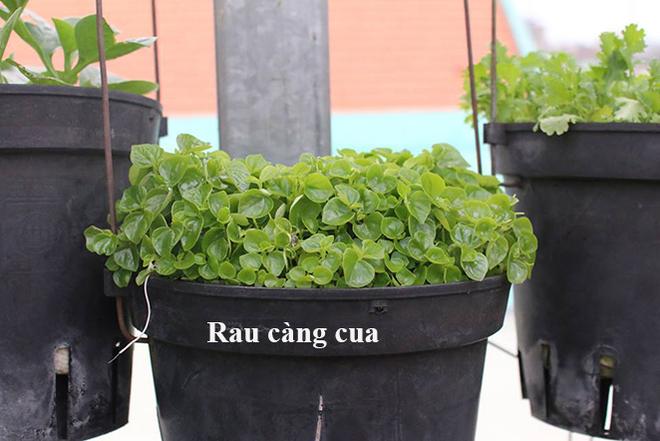 rau-cang-cua_1491931311_660x0.jpg