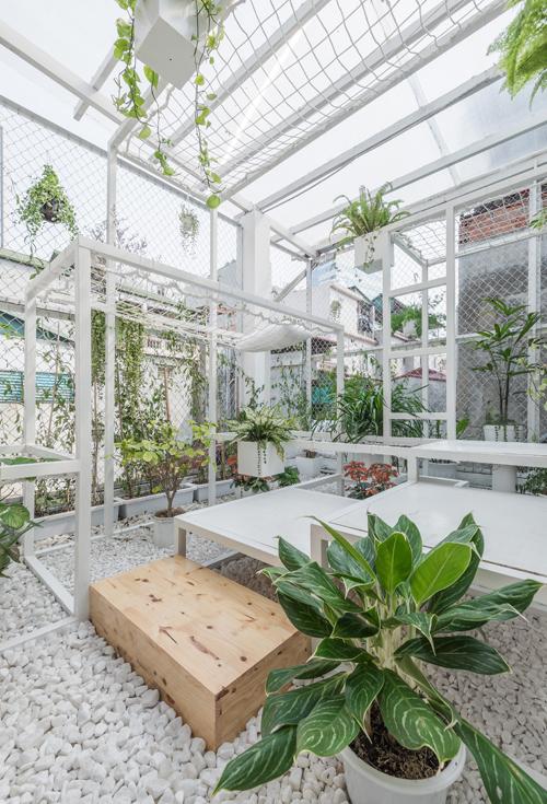 Gia chủ mắc võng giữa khu vườn lạ trên nóc nhà Hà Nội