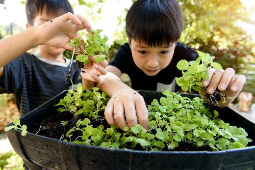 Vui chơi ngoài trời giúp trẻ sáng tạo hơn