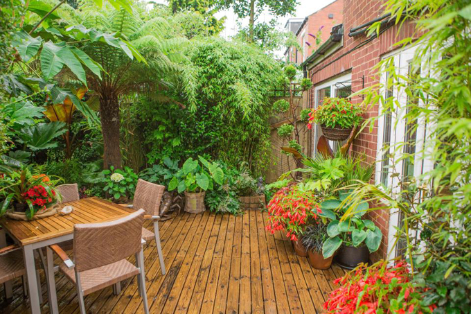 Chủ nhà Anh dành 20 năm biến sân sau thành rừng nhiệt đới
