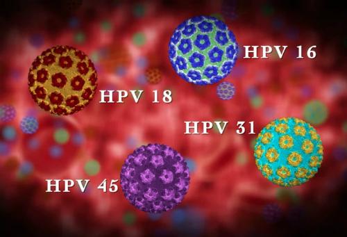 95% các trường hợp ung thư cổ tử cung phát hiện thấy virus HPV. Ảnh minh họa: doctor