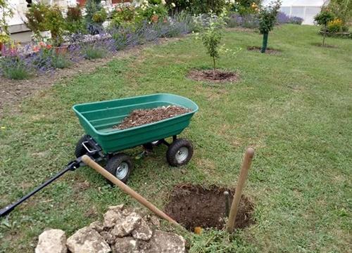 Nhưng việc làm đất trồng cây thì khó lắm em ạ, vì chị không phải dân biết làm vườn, mà đất thì loại đất vôi cứng lắm, chị phải mua vài tấn đất tốt để bỏ vào hố và làm vườn rau đó em
