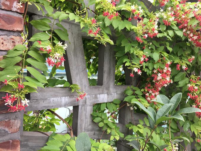 Anh Thưởng là người yêu thích thiên nhiên, cây cối nên bố trí rất nhiều cây trong nhà và ngoài vườn, giúp không gian thô mộc trở nên mềm mại hơn.