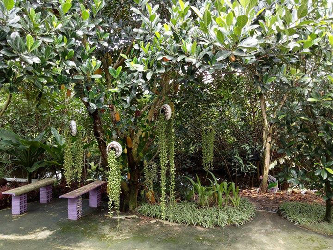 Chàng trai 9x tạo vườn nhà đẹp như công viên mà không tốn đồng nào