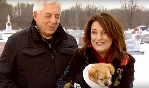 Chú chó không chịu rời mộ chủ giữa trời tuyết lạnh