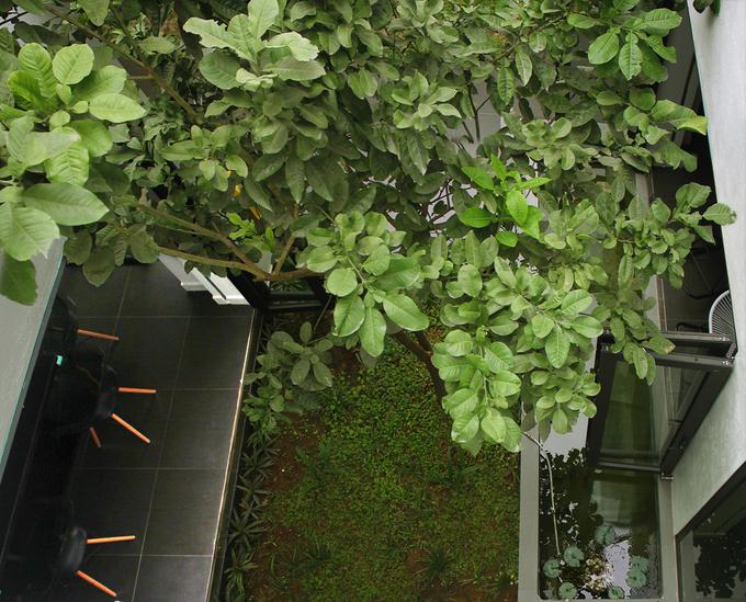 Khuôn viên xanh mát trong lòng nhà hộp Hải Phòng kín bưng