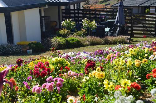 Khu vườn hoa rực rỡ sắc màu của chị Luyến tại Australia.