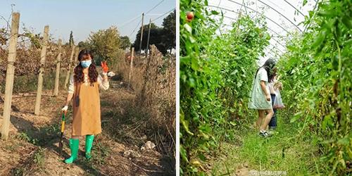 Khu vườn là nơi mà cô gái trẻ bỏ ra nhiều công sức nhất để cải tạo. Mảnh đất cằn cỗi, cây bị tàn lụi đã được phủ xanh với nhiều loại cây trái cho bữa ăn hàng ngày.