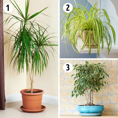 Loại cây tốt nhất cho nhà tắm, phòng ngủ, phòng bếp nhà bạn - 3