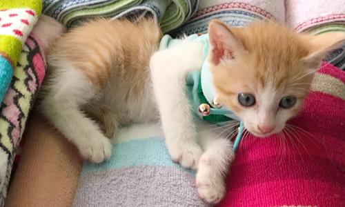 Người phụ nữ Sài Gòn cưu mang hơn 10.000 con mèo