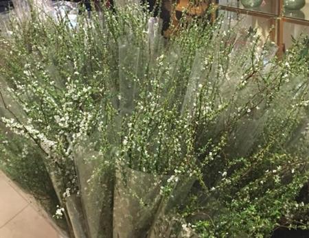 Chủ một hàng hoa trên phố Thi Sách cho biết mỗi ngày chị bán được hàng trăm bó tuyết mai. Những ngày cận Tết hoa cháy hàng, phải đặt trước.