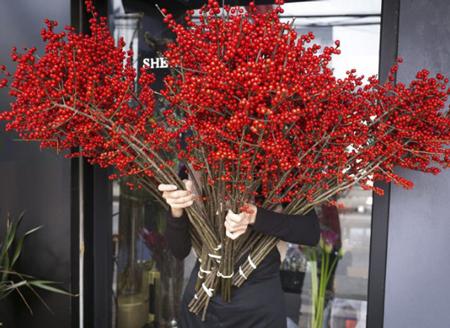 Đào đông nổi bật với sắc đỏ rực rỡ cùng những chùm quả chi chít.