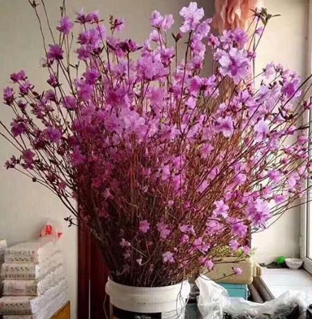Không quá lộng lẫy, xa hoa nhưng loài hoa này được nhiều bà nội trợ săn lùng
