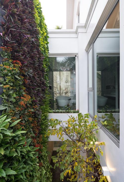 Chủ nhà Hà Nội đục mái để làm vườn thẳng đứng cao 2 tầng