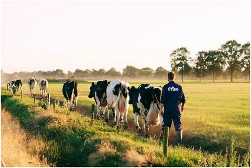 Sở hữu trang trại nuôi bò riêng cho phép FrieslandCampina chủ động nguồn sữa nguyên liệu, xử lý chỉ qua một lần nhiệt.