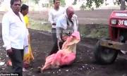 Con trai lôi mẹ già ra trước máy cày làm lá chắn khi tranh chấp đất