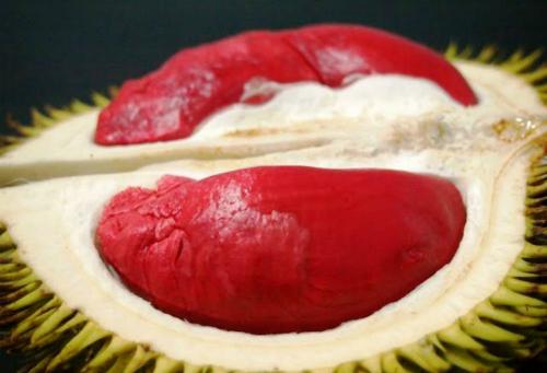 Sầu riêng ruột đỏ Malaysiađược bán tại TP HCM với giá khoảng 1 triệu đồng/quả - Ảnh: YD