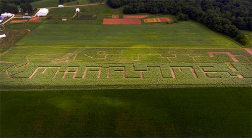 Dòng chữ Marry me mất 6 tháng để thành hình trên cánh đồng hoa.