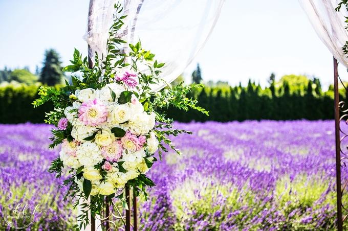 Cánh đồng hoa oải hương ở Washington mê hoặc uyên ương mùa cưới