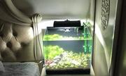 Trào lưu biến bể cá cảnh thành đèn ngủ