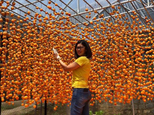 Chị Thu Nguyễn, người đã vào tận Đà Lạt để học hỏi cách làm hồng treo gió ngon từ các chuyên gia Nhật Bản, cho biết