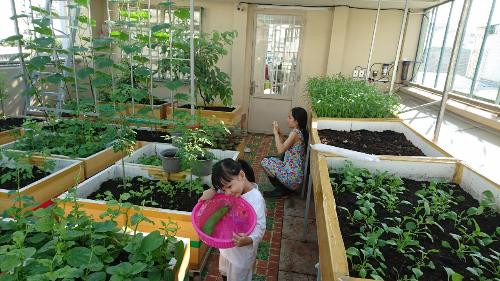Trào lưu đại gia thành phố về ngoại ô trồng rau sạch tự cung tự cấp - Uyên ơi, chỉnh zone thành Đời sống - lối sống tin số 5 giúp chị nha