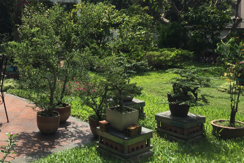 16aa 680x0 - Vườn như 'công viên nhỏ' trên sân thượng gia đình ở TP HCM
