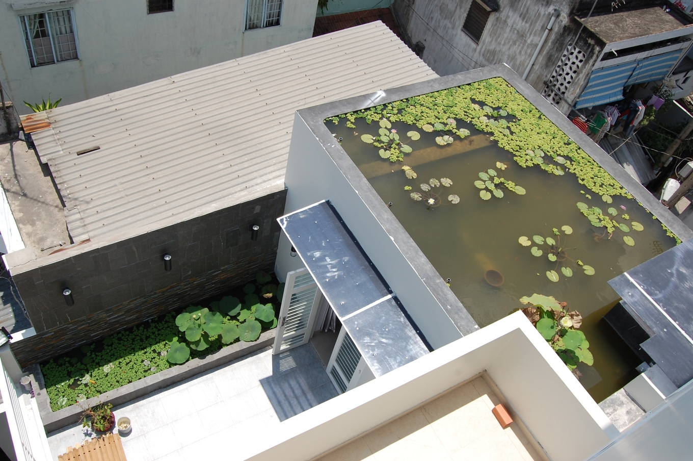 Hồ sen trên mái nhà Sài Gòn 10 năm không phải thay nước