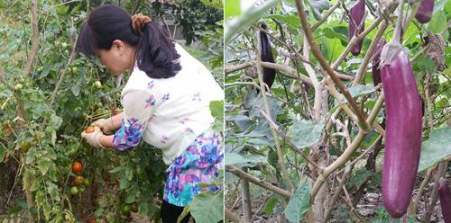 Vừa về hưu nên cô Tâm lại càng có thời gian chăm sóc cho ngôi nhà vườn của mình. Dưới bàn tay khéo léo của cô, cây cối thi nhau đâm chồi nảy lộc.