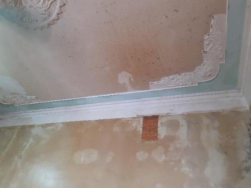Tường nội thất bị ngả màu và phủ đầy rêu mốc do thấm nước.