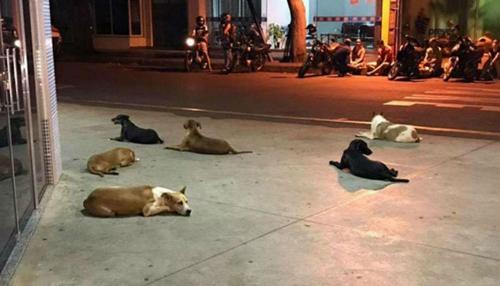 6 chú chó nằm chờ chủ nhân trước cửa bệnh viện. Ảnh: Reddit.