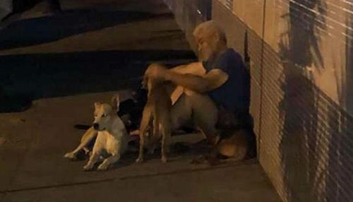 Ông Luis coi những chú chó như những người bạn của mình. Ảnh: Reddit.