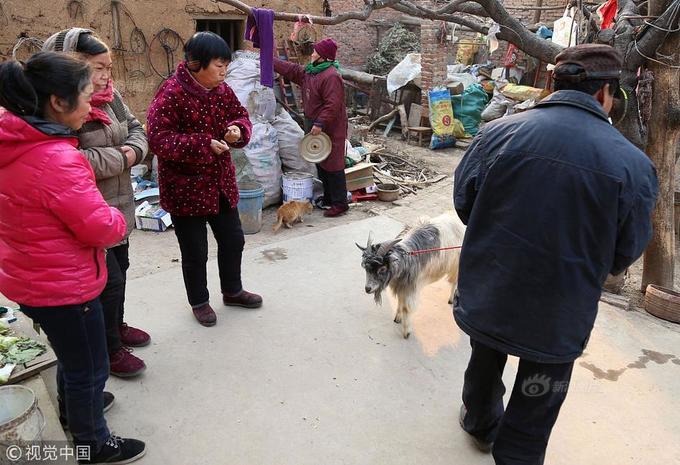 Bác nông dân dẫn cừu, lợn, gà vịt trong nhà đi diễn xiếc - ảnh 15